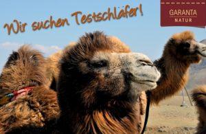 Kamel zum test